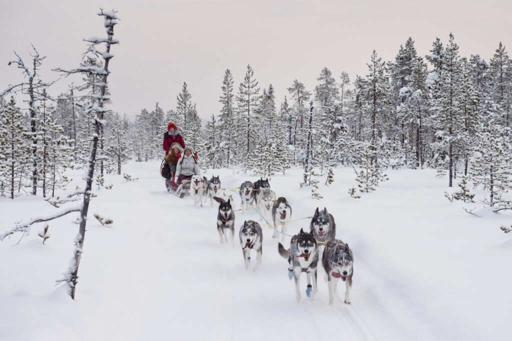Huskytocht Zweden