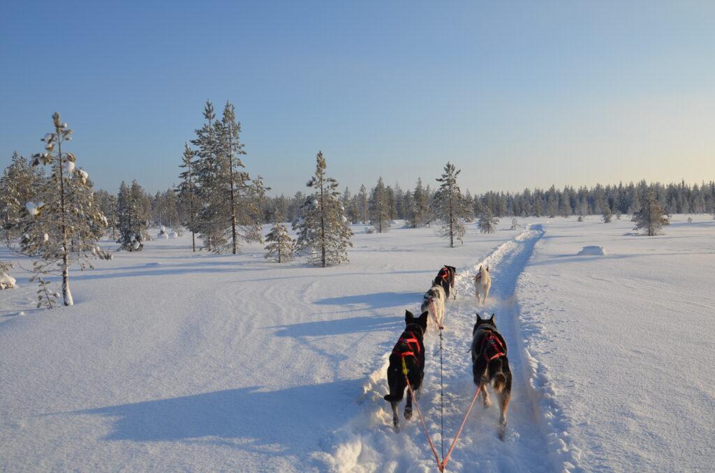 Finn-Jann Huskyfarm Lapland Finland
