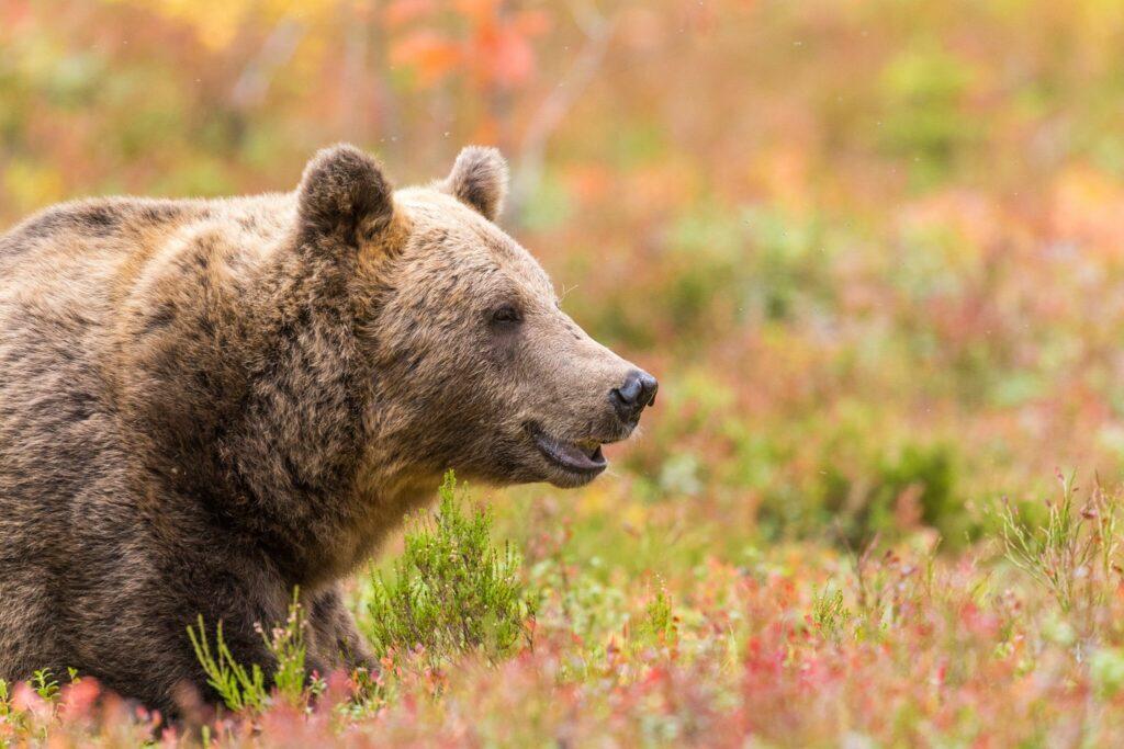 Beer Finland Tom Linster Boreal Wildlife Center
