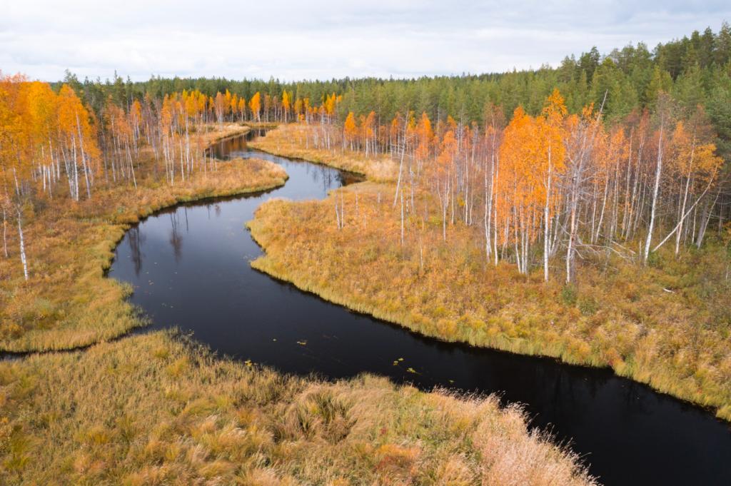 Hoen Finland Tom Linster Boreal Wildlife Center